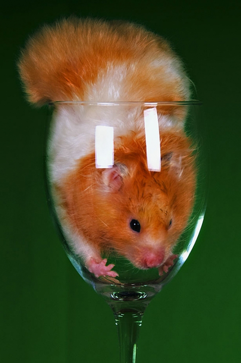"Mr Hamster says ""get me outta here!"""