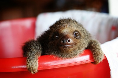 Oh hai Mr Sloth!