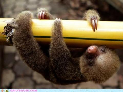 Oh hai sloth!