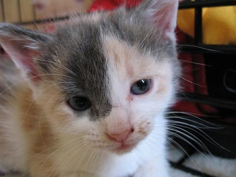 Oh hai Kitten!