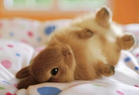 Bunny Tumble!