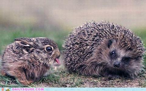 Cheeky Rabbit via Daily Squee