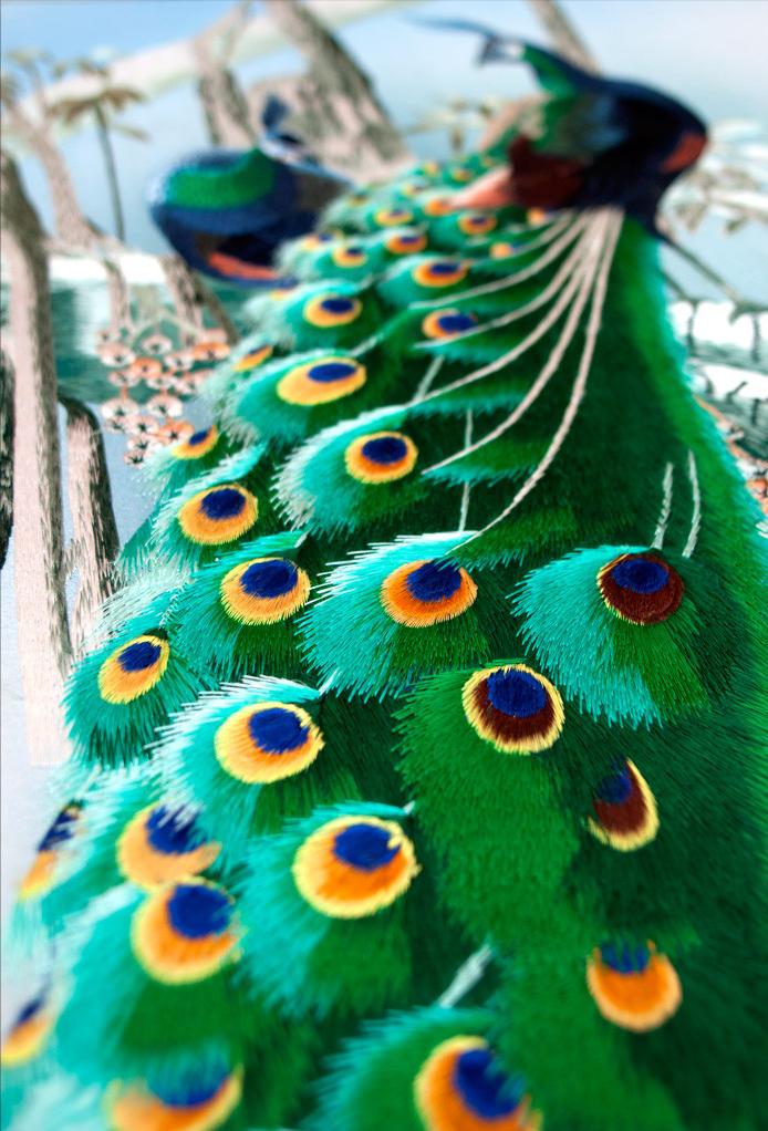 Close-Up+peacock