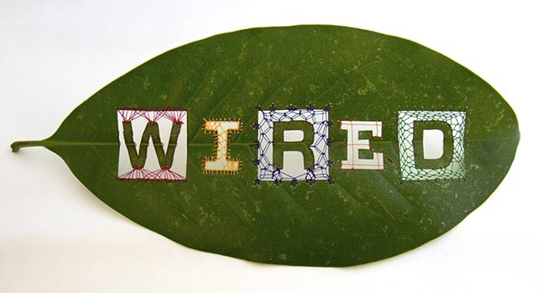"""""""Wired"""" Leaf, by Hillary Waters Fayle"""