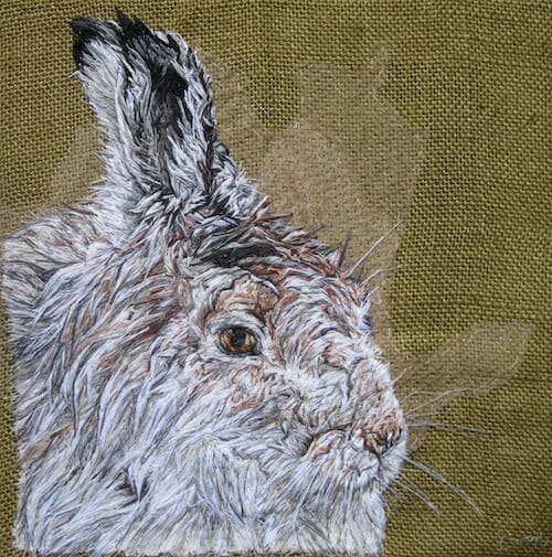 Emily Tull - Mountain Hare