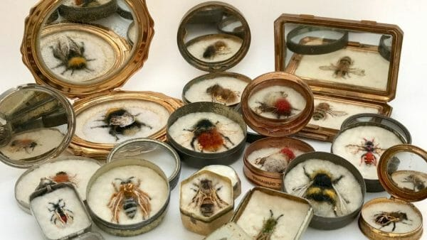 Felt Insects by Lydia Needle