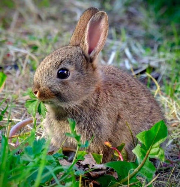 3d cross stitch rabbit