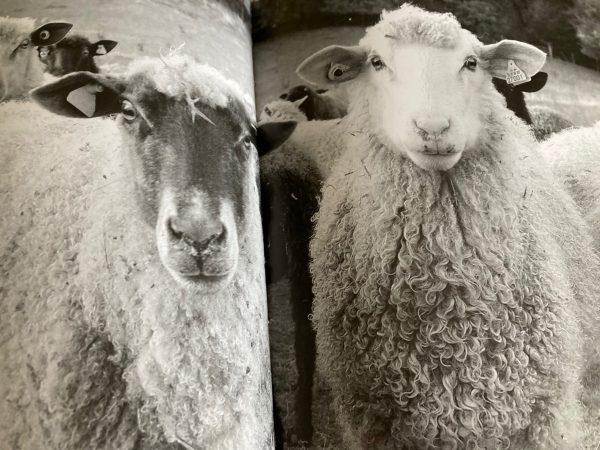Jenny Hill Felt Sheep